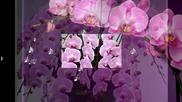Ах,този божествен аромат - орхидеята...(piano and violin)...