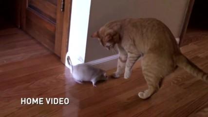 Малко по-различна игра на котка и мишка