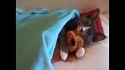 Котка С човешки Мисли