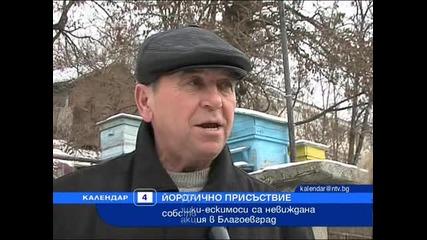 Кокошки ескимоси в Благоевград!