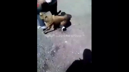 Ето какво се случва когато човек дразни куче