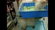 Кученце Казва Елмо Супер Смешно - S00 Cute