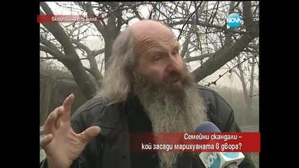 Семейни скандали - кой засади марихуаната в двора - Часът на Милен Цветков