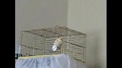 Много красиво канарче пее.