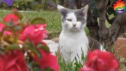 Котешки изцепки - Много смях