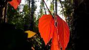 Осень - музыка моей души