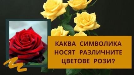Каква символика носят различните цветове рози?