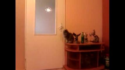 Котка си отваря врата