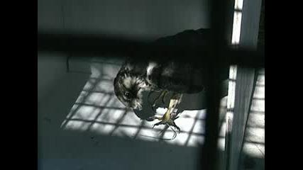 Умът на Шимпанзето - Експерименти