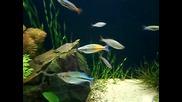Aquarium With Rainbows