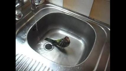 Розелата ми се къпе - част 2