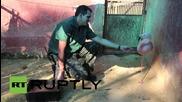 Фламинго се учи да ходи с протеза на крака в Бразилия