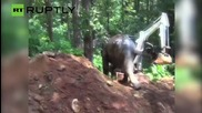 Elephant in Abandoned Well Saved by Excavator