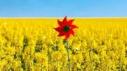 Земята в красиви жълти багри ...