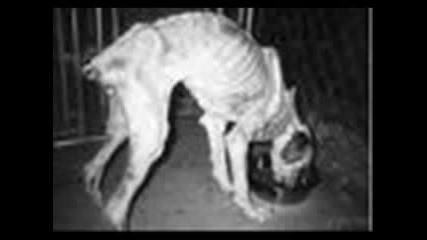 Бездомните Кучета И Котки