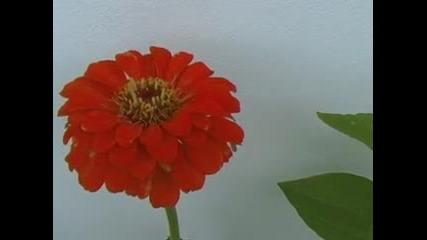 Цветята от Терасата Лято 2010 Год.