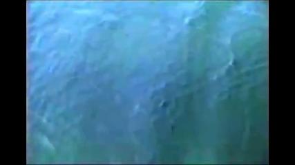 Туристи във възторг при вида от гигантски въздушни мехури изпускани от китове