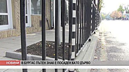 В Бургас пътен знак е посаден като дърво