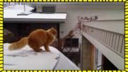 Компилация от котешки провали