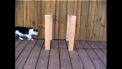 Котка Прави Илюзия