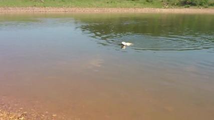 Кучешка бомба във вода