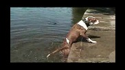 Смях: куче вади камък от вода и той пак пада