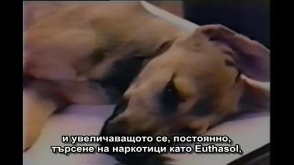 Евтаназия На Бездомните Кучета
