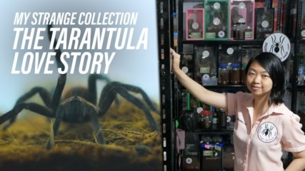 Have arachnophobia? Then this video isn't for you!