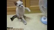 Котка Vs Вентилатор