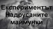 Експериментът Надрусаните маймунки - 1969 г.
