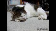 Котка пее блус ... :d