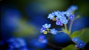 Синьо цвете ... Незабравка! ... (по стихове на iren5) ... (music Ernesto Cortazar) ...
