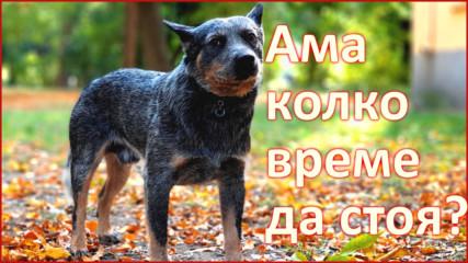 """Как да научим кучето на """"Стой!"""""""