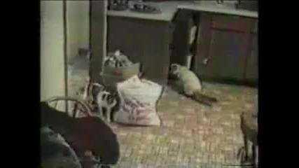 много смешно клипче за котки