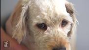 Бездомно куче получава прическа, която спасява живота му