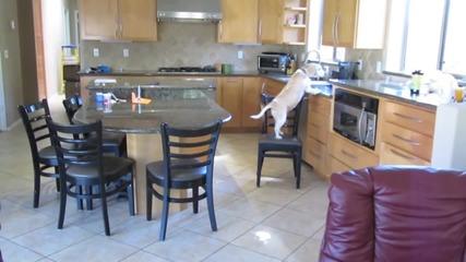Той инсталира камера, за да разбере как кучето му краде храна… Вижте какво записа камерата