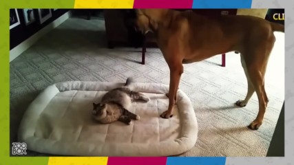 Котките превземат кучешките места