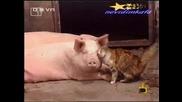 Господари На Ефира - Любовна Сцена Между Котка И Прасе!!! 16.04.2008