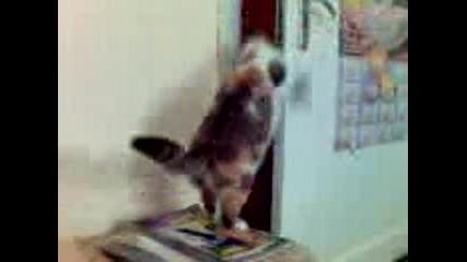 Котка Си Отваря Вратата