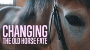 Sparing horses from slaughter