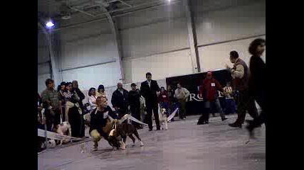 Кучета Изложба Балканика 2005