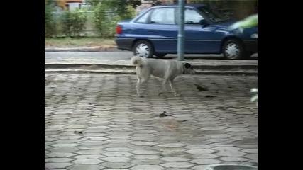 Солена глоба,  ако разхождаш кучето си в парка!