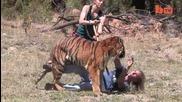 Тигър атакува човек - Real Tiger Attack Stunt