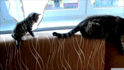 Коте vs Детска играчка