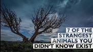 7 от най-странните животни