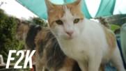 Какво ще стане, ако котките изчезнат?