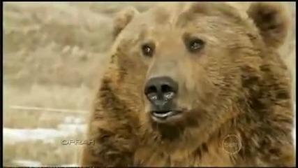 Приятелство между мечка и човек