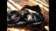Коте на 15 дни