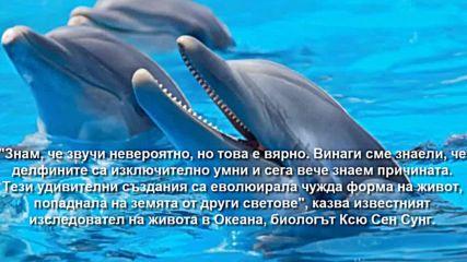 Делфините - потомци на извънземна цивилизация