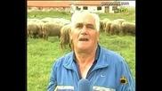 Пастири